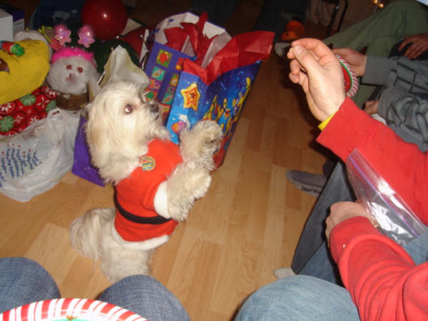 Berkley Claus